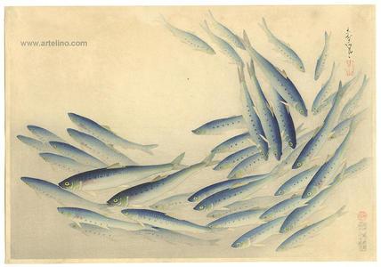 大野麦風: Sardine- Pilchard- Maiwashi — マイワシ - Japanese Art Open Database