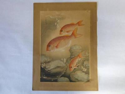 Bakufu Ohno: Snapper- Tai — マダヒ - Japanese Art Open Database