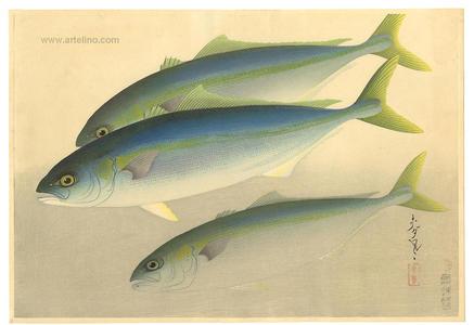 大野麦風: Young Yellowtail- Hamachi — ハマチ - Japanese Art Open Database