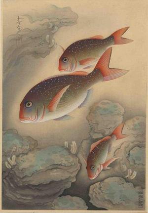 大野麦風: Red Bream- Tai - Japanese Art Open Database