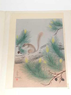 大野麦風: Squirrel in a pine tree - Japanese Art Open Database
