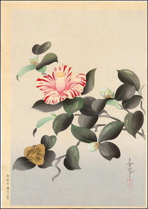 Bakufu Ohno: Unknown- Camellia - Japanese Art Open Database