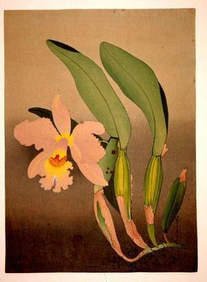 Bakufu Ohno: Western Orchid — 洋蘭図 - Japanese Art Open Database