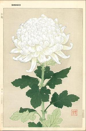 Kawarazaki Shodo: White Chrysanthemum - Japanese Art Open Database
