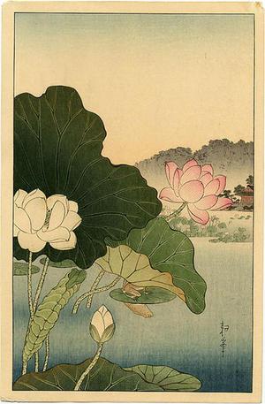 古峰: A Frog on Lotus Leaf - Japanese Art Open Database