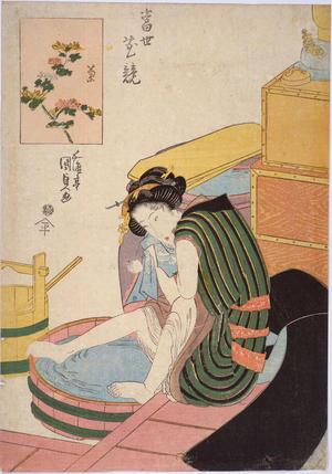 歌川国貞: Chrysanthemum — 菊 - Japanese Art Open Database