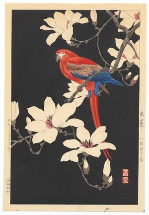 Nishimura Hodo: Parrot on a branch of magnolia - Japanese Art Open Database