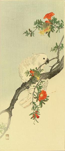 Oda Kazuma: A parakeet perched on a pomegranate branch - Japanese Art Open Database