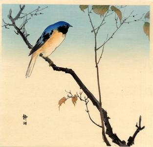 静湖: Bluebird and Fruiting Maple - Japanese Art Open Database
