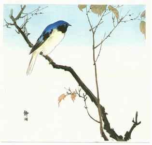 静湖: Bluebird and Fruiting Maple - Japanese Art Open Database