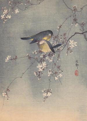 Shoson Ohara: Finches in Cherry Tree - Japanese Art Open Database
