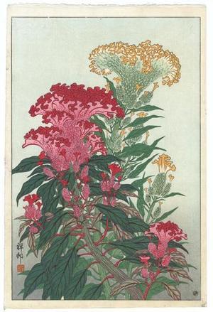 Shoson Ohara: Flowering Coxcomb - Japanese Art Open Database