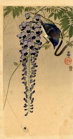 Shoson Ohara: Flycatcher and Wisteria - Japanese Art Open Database
