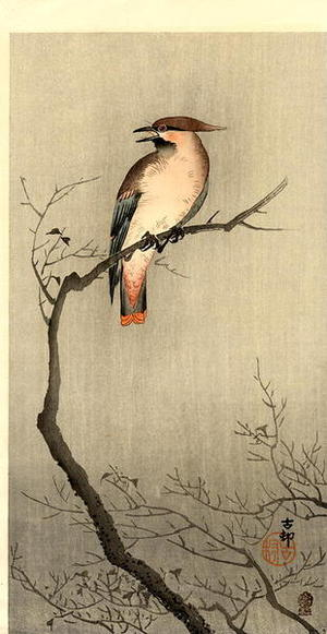 Shoson Ohara: Japanese Waxwing - Japanese Art Open Database