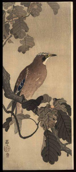 Shoson Ohara: Jay on an oak branch - Japanese Art Open Database