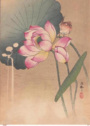 Shoson Ohara: Lotus Flower and Finch - Japanese Art Open Database