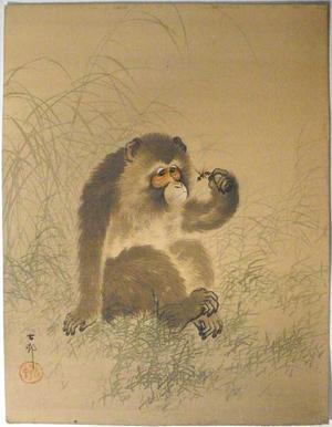 Shoson Ohara: Monkey Holding a Dragonfly - Japanese Art Open Database