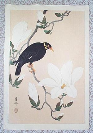 Shoson Ohara: Myna bird- Indian Hill Minor and Magnolia - Japanese Art Open Database