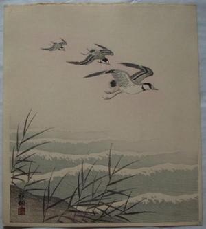 Shoson Ohara: Plover Family — ちどりの親子 - Japanese Art Open Database