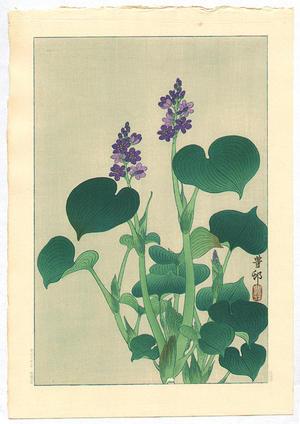 Shoson Ohara: Purple Flowering Hosta - Japanese Art Open Database
