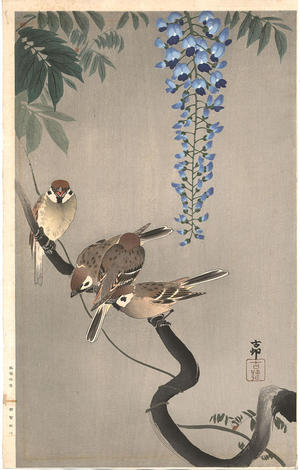 Shoson Ohara: Sparrows on wisteria - Japanese Art Open Database