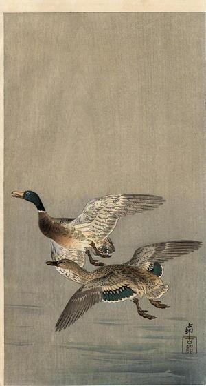 Shoson Ohara: Two mallard ducks in flight above the water - Japanese Art Open Database