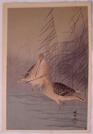 Shoson Ohara: Unknown, sand pipers - Japanese Art Open Database