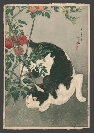 Shotei Takahashi: Black Cat And Tomato Plant - Japanese Art Open Database