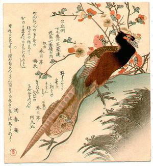 Kubo Shunman: Pheasant - Japanese Art Open Database