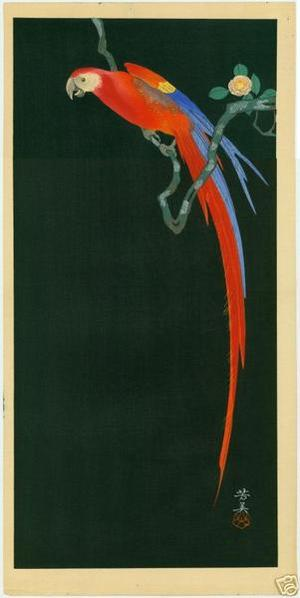 Tsuruoka Kakunen: Macaw on Flowering Branch - Japanese Art Open Database