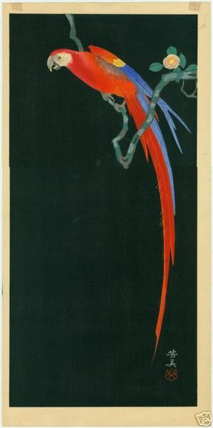 Tsuruoka Kakunen: Macaw on Flowering Branch - Japanese Art Open Database