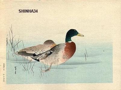 Watanabe Seitei: Mallard Ducks - Japanese Art Open Database