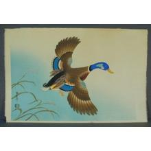 麻田辨次: Unknown, Duck in flight - Japanese Art Open Database