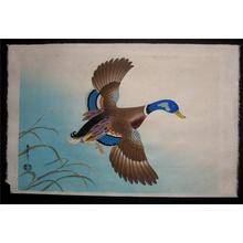 Asada Benji: Unknown, Duck in flight - Japanese Art Open Database