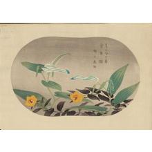 藤島武二: Saururus Chinensis and Hypericum Patulum — はんぱく草, 金糸草 - Japanese Art Open Database