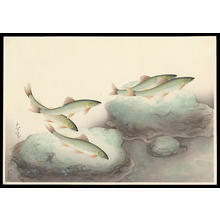 大野麦風: Ayu- Sweetfish — 鮎 - Japanese Art Open Database
