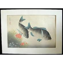 大野麦風: Black Sea Bream- Kurodai — クロダイ - Japanese Art Open Database