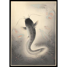 大野麦風: Catfish — なまず (Namazu) - Japanese Art Open Database