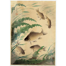 大野麦風: Crucian Carp- Funa — フナ - Japanese Art Open Database