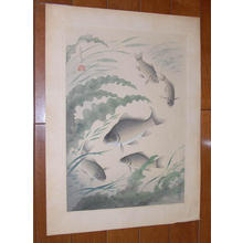 Bakufu Ohno: Crucian Carp- Funa — フナ - Japanese Art Open Database