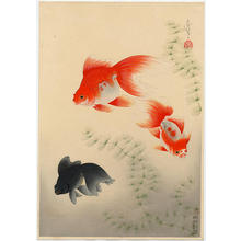 Bakufu Ohno: Goldfish - Japanese Art Open Database