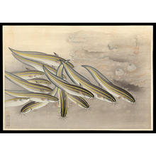 Bakufu Ohno: Gonzui- Striped Catfish — ゴンズイ - Japanese Art Open Database