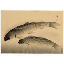 大野麦風: Japanese Carp - Japanese Art Open Database