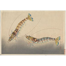 大野麦風: Kuruma-Ebi- shrimps - Japanese Art Open Database