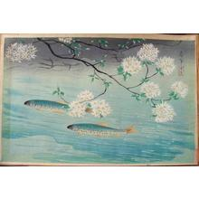 Bakufu Ohno: Rainbow Trout — ヤマメ - Japanese Art Open Database