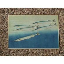 大野麦風: Sayori- Japanese Needlefish — サヨリ - Japanese Art Open Database