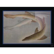 Bakufu Ohno: Shark- Same - Japanese Art Open Database