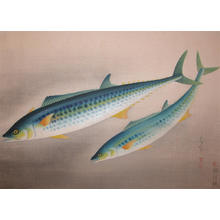 大野麦風: Spanish Mackerel - Japanese Art Open Database