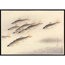 Bakufu Ohno: Trout- Higai - Japanese Art Open Database