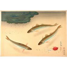 Bakufu Ohno: Whiteing — キス - Japanese Art Open Database